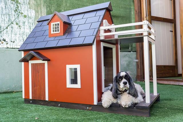 מה חשוב לדעת לפני שבוחרים מיטות לכלבים גדולים וקטנים?